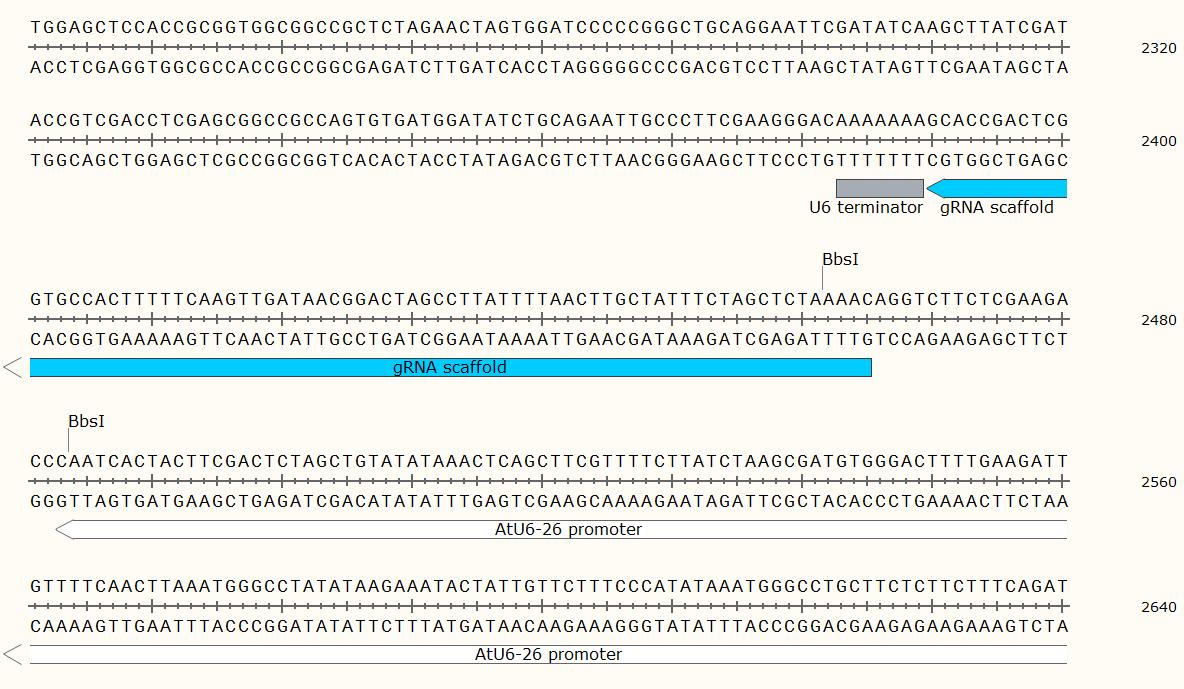 ATU6-26-sgRNA-SK-vector