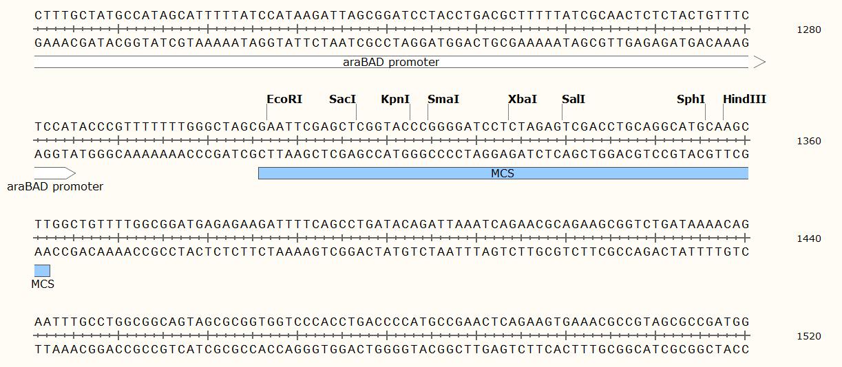 pBAD30 Plasmid