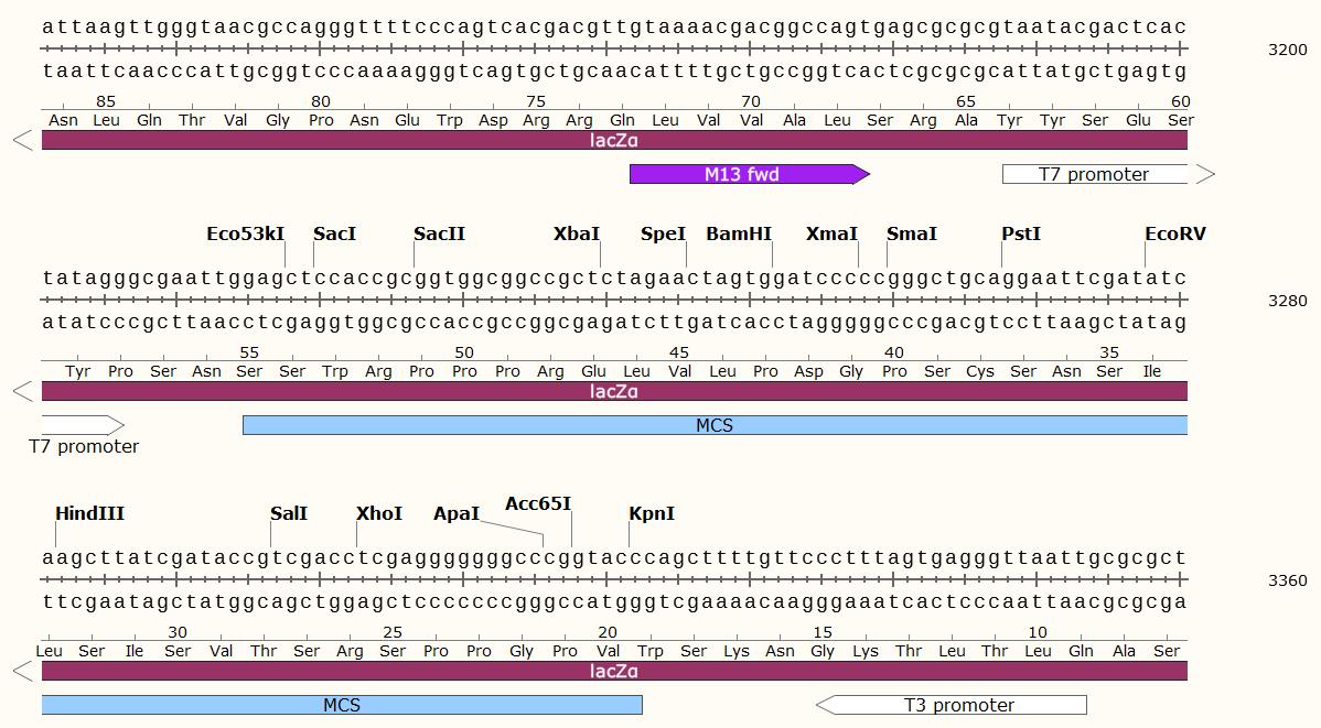 pBBR1MCS-1-plasmid