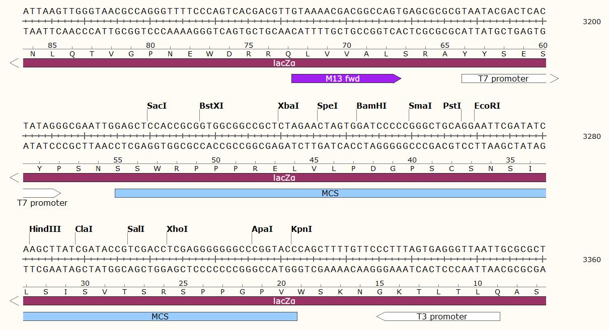 pBBR1MCS-5-plasmid