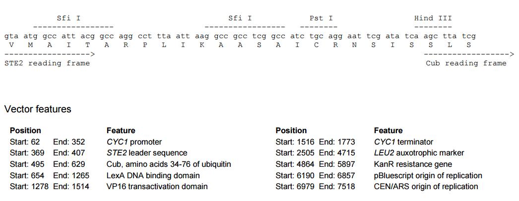 pBT3-STE-plasmid