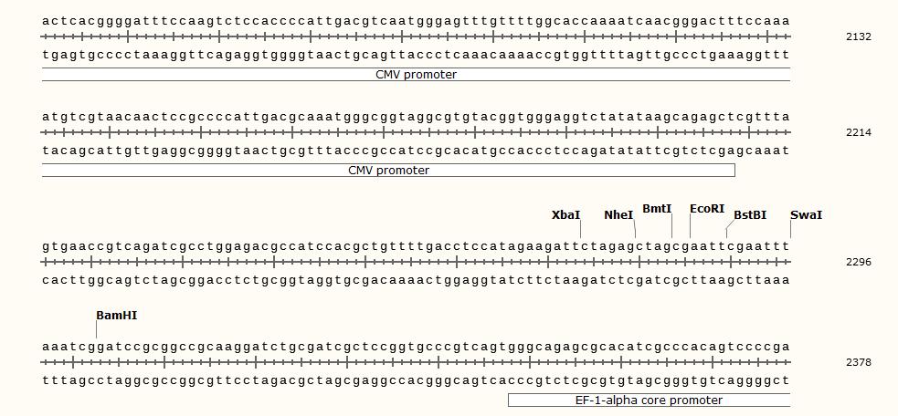 pCDH-CMV-MCS-EF1-CopGFP-T2A-Puro-polyclonal-site