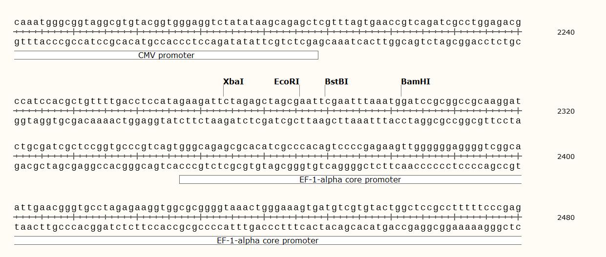 pCDH-CMV-MCS-EF1-copGFP-polyclonal-site