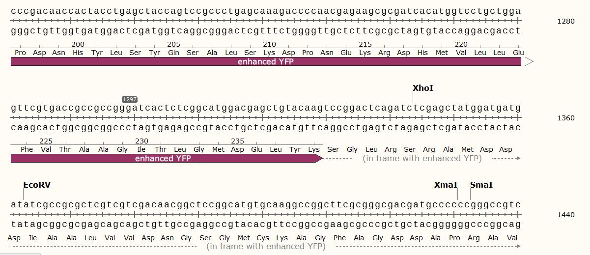 pEGFP-Actin-polyclonal-site