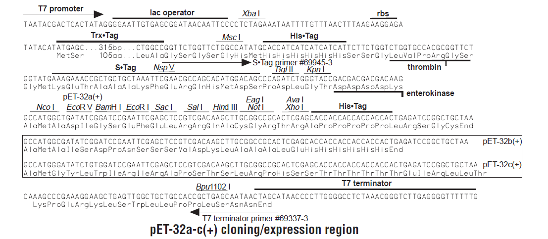 pET-32b-plasmid