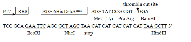 pET-DsbA-plasmid