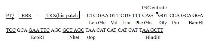pET-Trx-vector