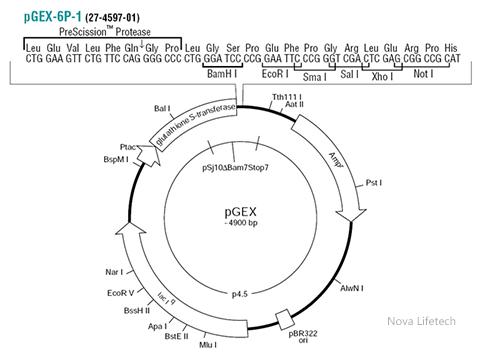 pGEX-6P-1-Plasmid