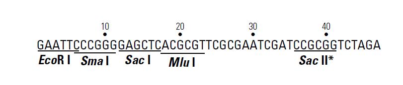 pHIS2-plasmid