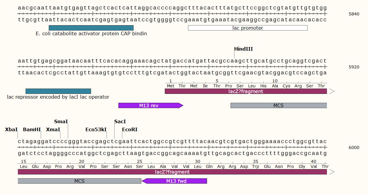 pHT304-plasmid