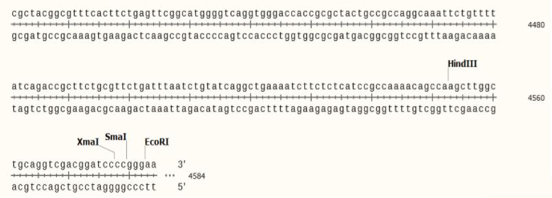 pKK223-3-plasmid