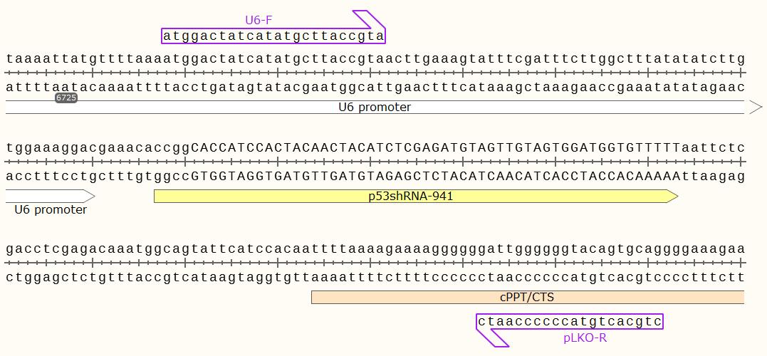 pLKO-p53-shRNA-941-vector