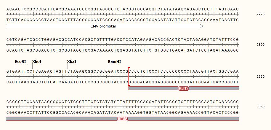 pLVX-IRES-Neomycin-Plasmid