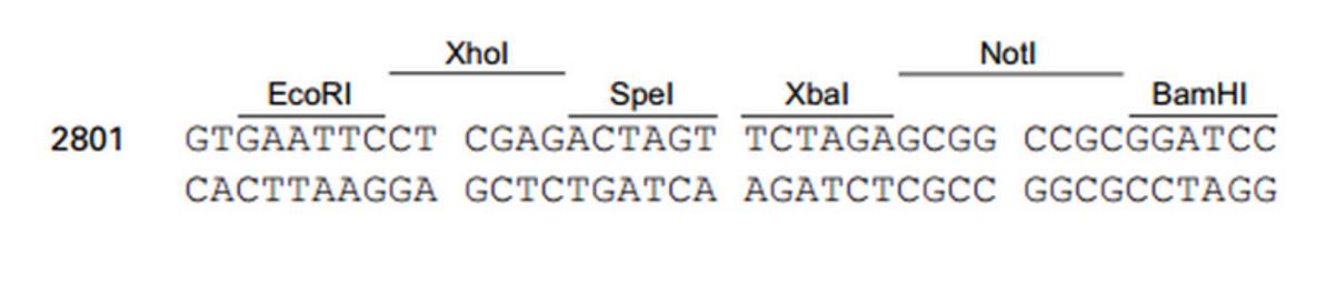 pLVX-IRES-Puro-plasmid
