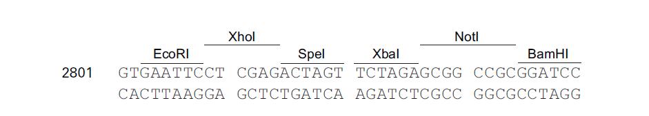 pLVX-IRES-Zsgreen1-plasmid