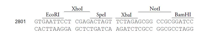 pLVX-IRES-mCherry-plasmid