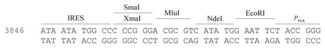 pLVX-TRE3G-Zsgreen1-plasmid