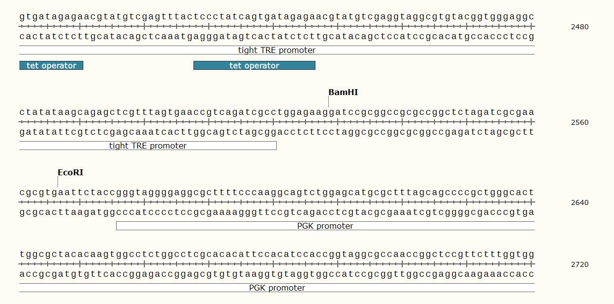 pLVX-Tight-Puro-plasmid