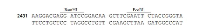 pLVX-shRNA1-plasmid