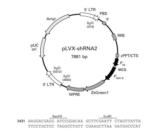 pLVX-shRNA2