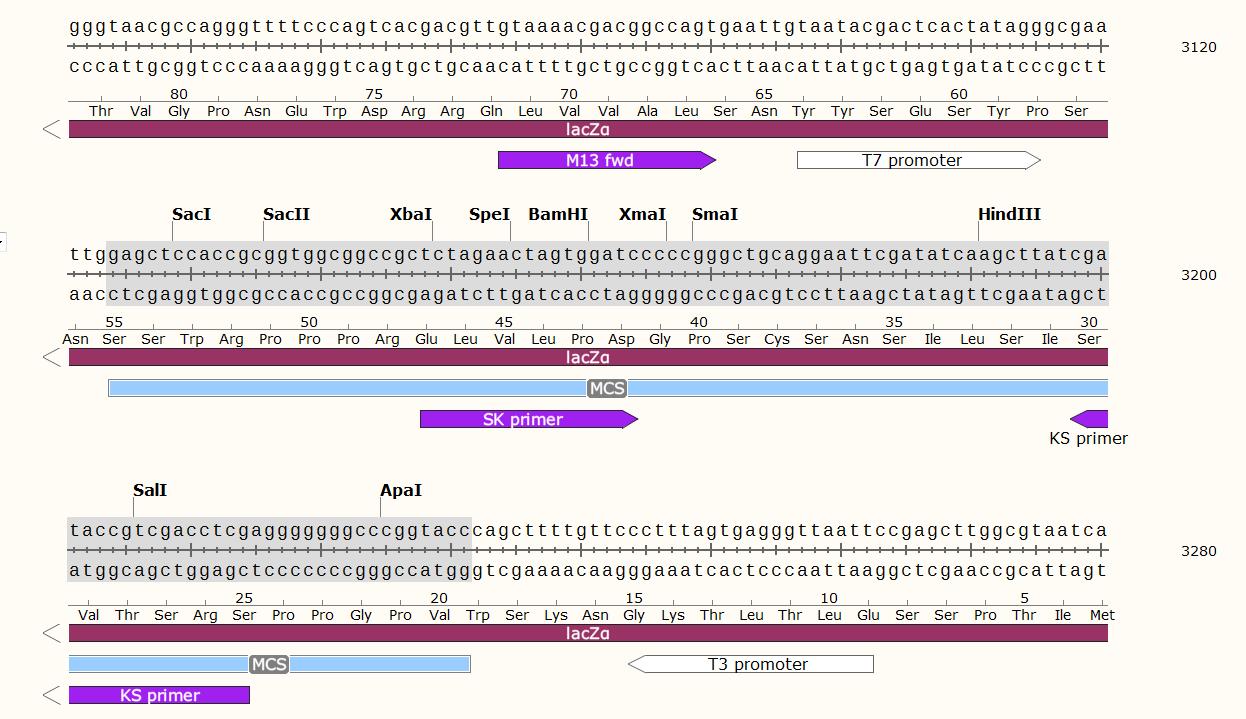 pRS315-Plasmid