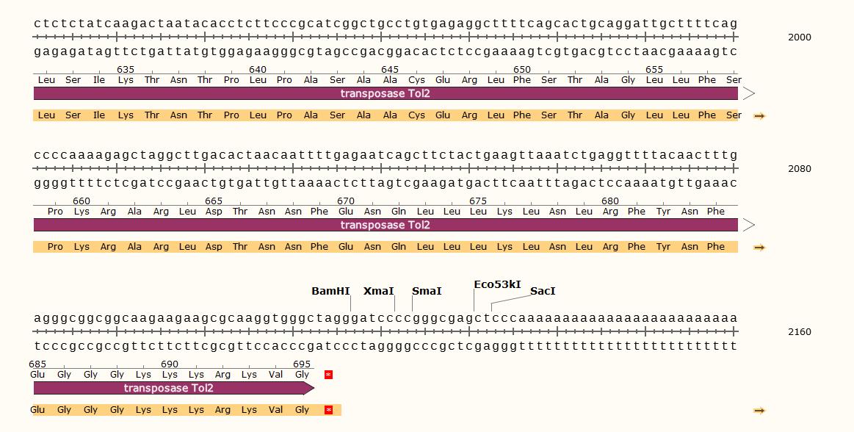 pSP64-Tol2-Transposase-vector