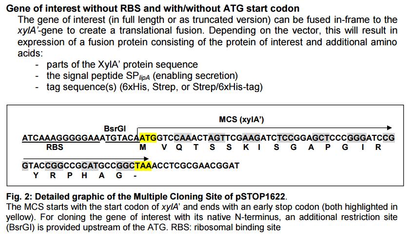 pSTOP1622-plasmid