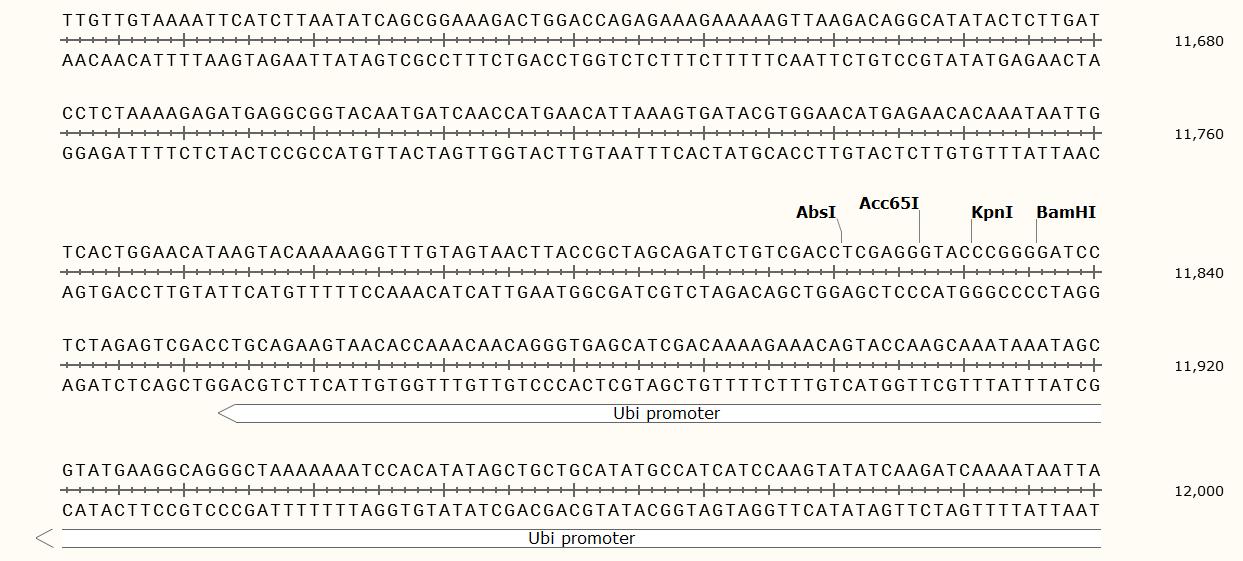 pTCK303-Plasmid