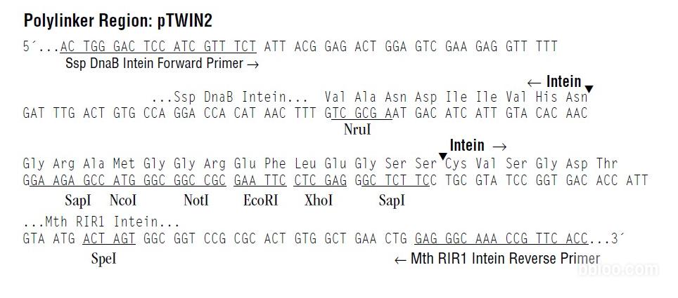 pTWIN2-vector