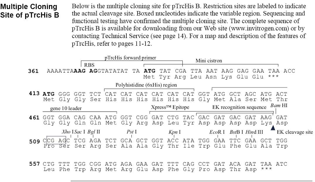 pTrcHisB-vector