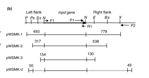pWM91 plasmid