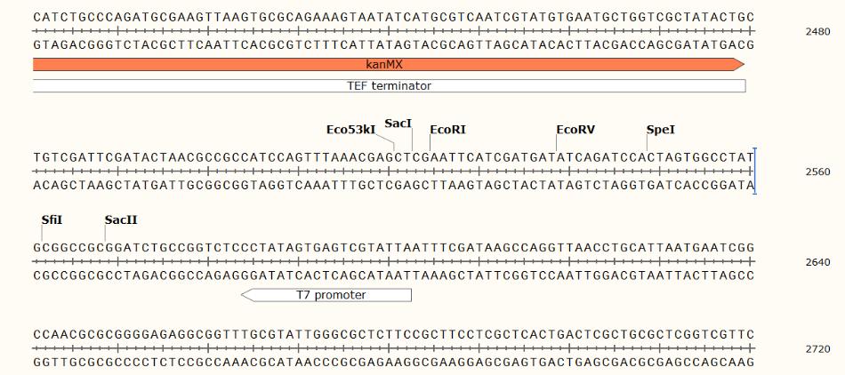 pYM30-ECFP-plasmid