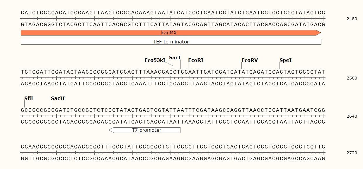 pYM33-EBFP plasmid
