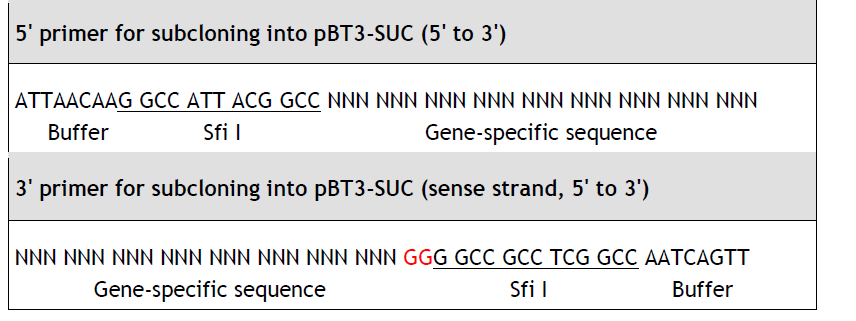 primer for subcloning into pBT3-SUC